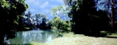 Lovely picnic location near Bowraville © 2000 Photo by Nambucca Graphics