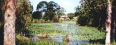Lilly pond in Dawkins Park Macksville  © 1999 Photo by Nambucca Graphics